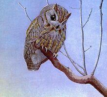 Screech Owl by Vintagee