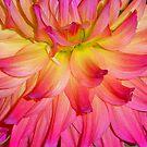 Purple-ish Petals by Jeff  Burns