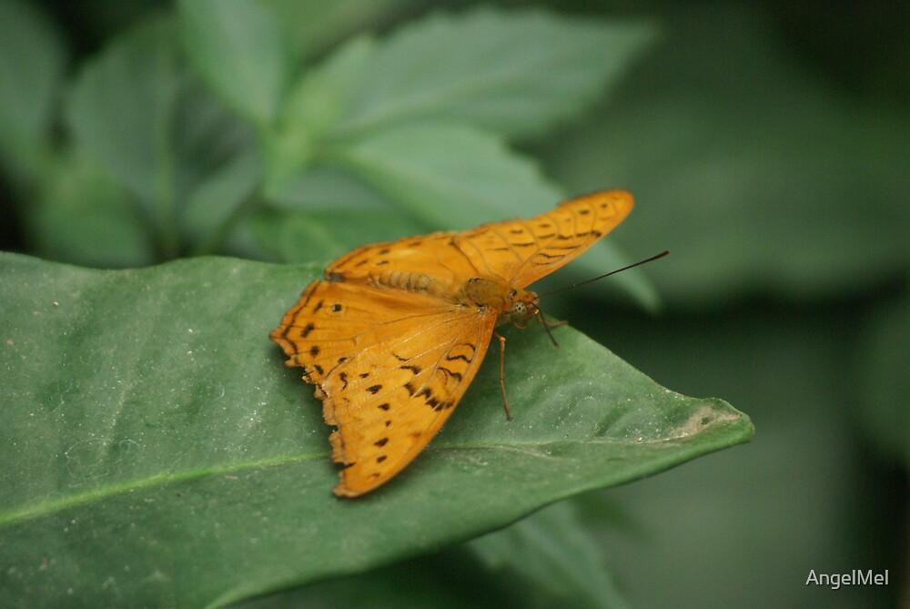 Moth on a leaf by AngelMel