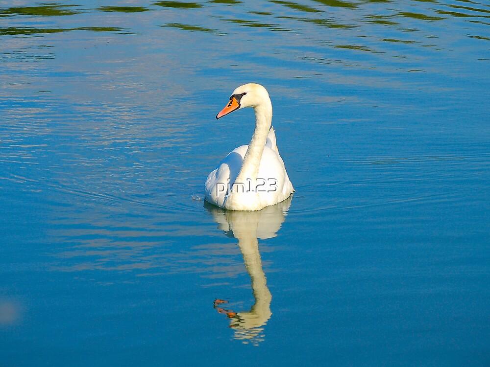 Swan by pjm123