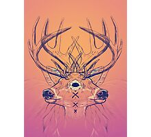 Dutch Deer Photographic Print
