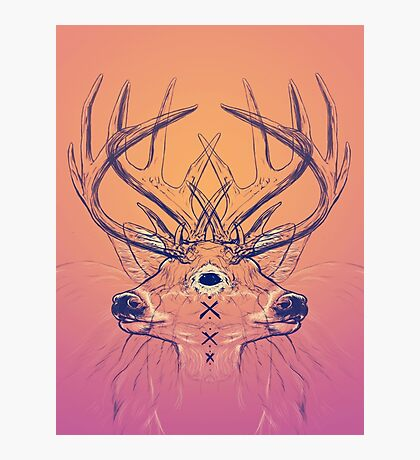 Dutch Deer Photographic Print