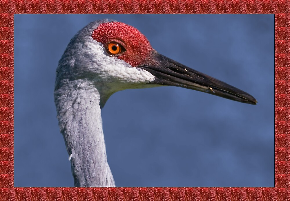 Sandhill Crane Listening to His Mate Greeting Card by Delores Knowles