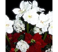 Holiday Floral Photographic Print
