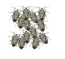 Stink Bugs Galore..Beautifully Bedazzled Bugs by Roger Swezey