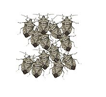 Stink Bugs Galore..Beautifully Bedazzled Bugs Photographic Print