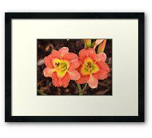 Fleurs orange Framed Print