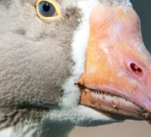 Domestic Goose / Pommersche Gans Sticker