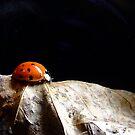 Along The Leaf by Suni Pruett