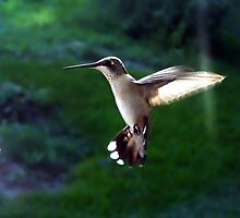 In Flight by Suni Pruett