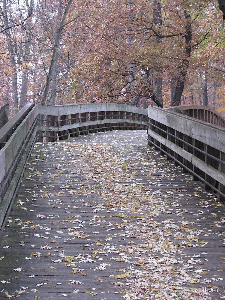 Fall Walk by thorn