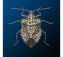 The Wonderful Dazzling Stink Bug Photographic Print