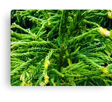 Twisted Leaves Canvas Print