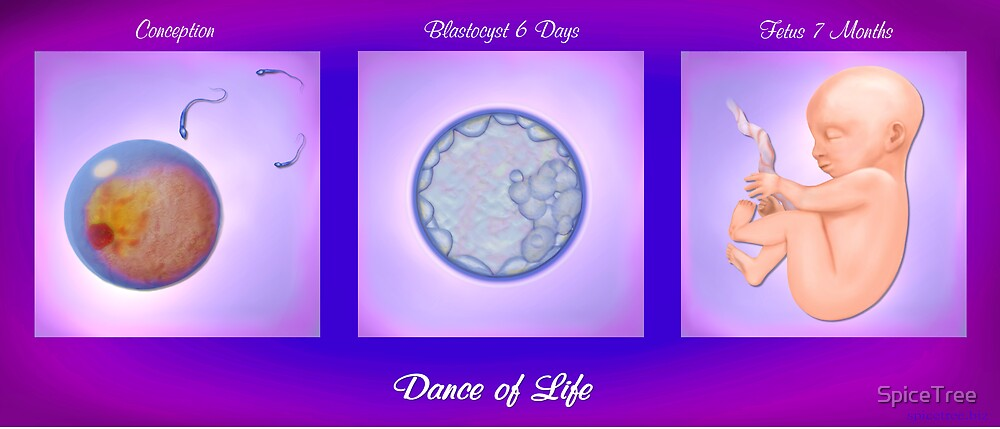 Dance of Life - 3 Stages by SpiceTree