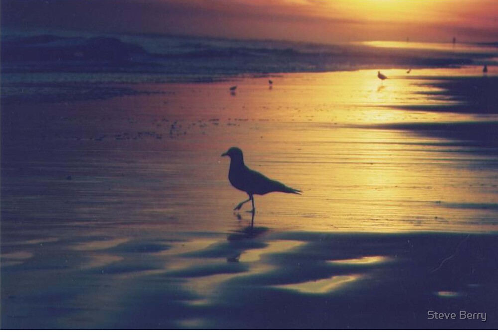 bird standing by the ocean by Steve Berry