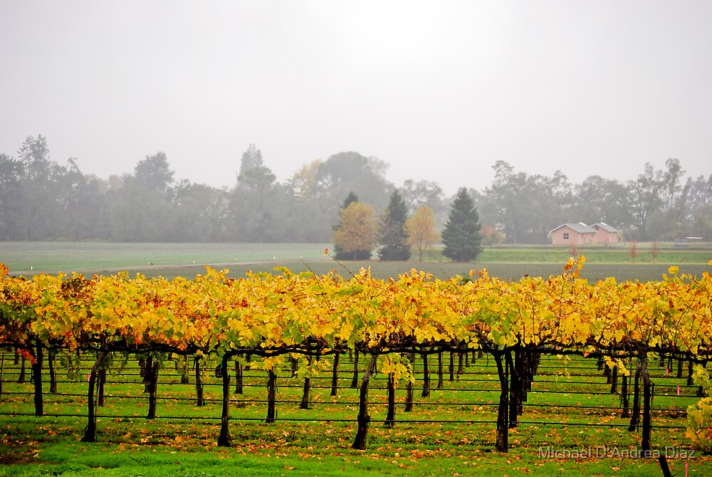 Winery Mist by Michael D'Andrea Diaz
