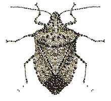 One Beautifully Bedazzled Stink Bug by Roger Swezey