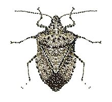 One Beautifully Bedazzled Stink Bug Photographic Print