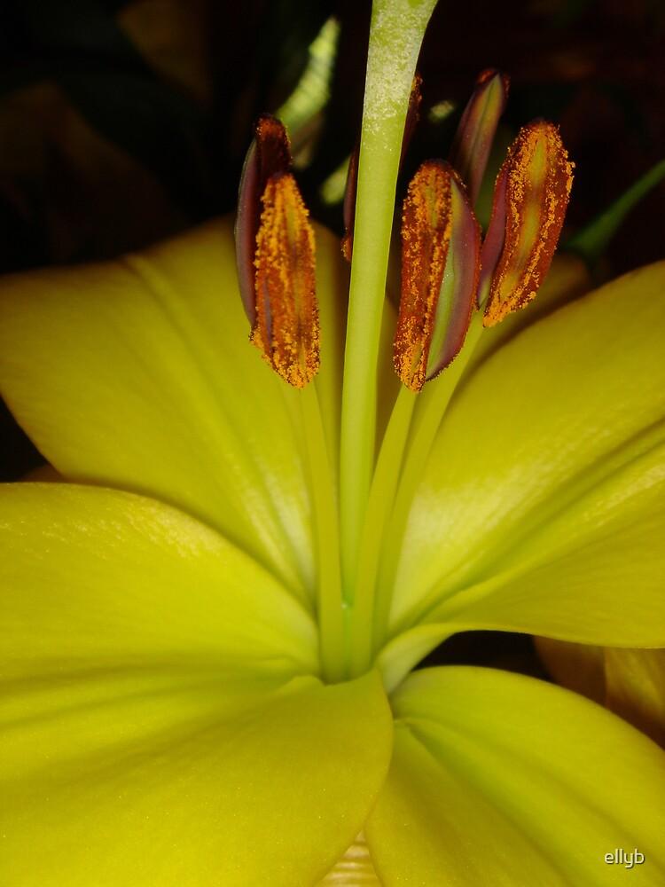 flower by ellyb