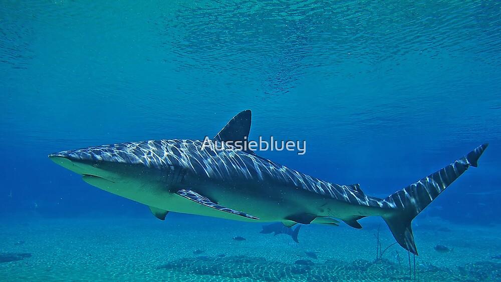 Shark, 4 by Aussiebluey