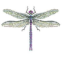 Bedazzled Dragonfly by Roger Swezey