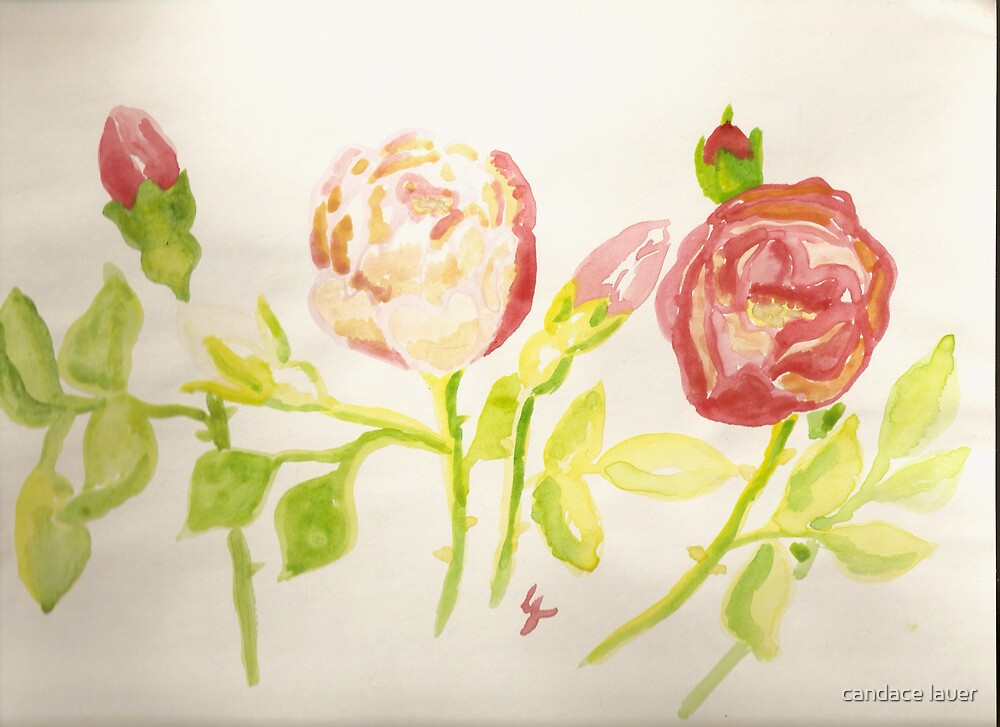 pink and red wild roses  by candace lauer