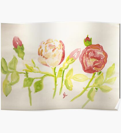 pink and red wild roses  Poster