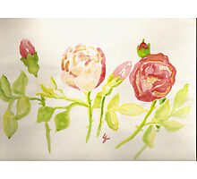 pink and red wild roses  Photographic Print