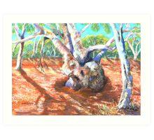 Silverton,River Gums Art Print