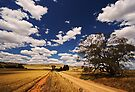 Wild Dog Hill Rd by KathyT