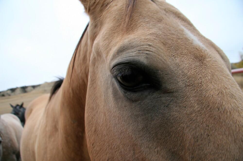 HORSE SENSE by martin venit