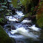 creek near Waratah, Tasmania  by gaylene