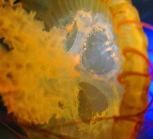Jelly Fish Series no.6 by aum7