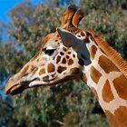 Giraffe profile #2 by Penny Smith