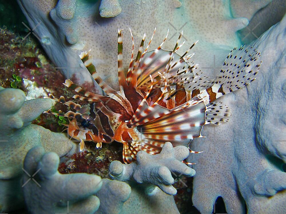 Zebra Lionfish Macro by Michael Powell