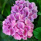 """""""""""""""""""""""ENCHANTED FLOWERS - LIMIT 3 DAILY"""""""""""""""""""""""