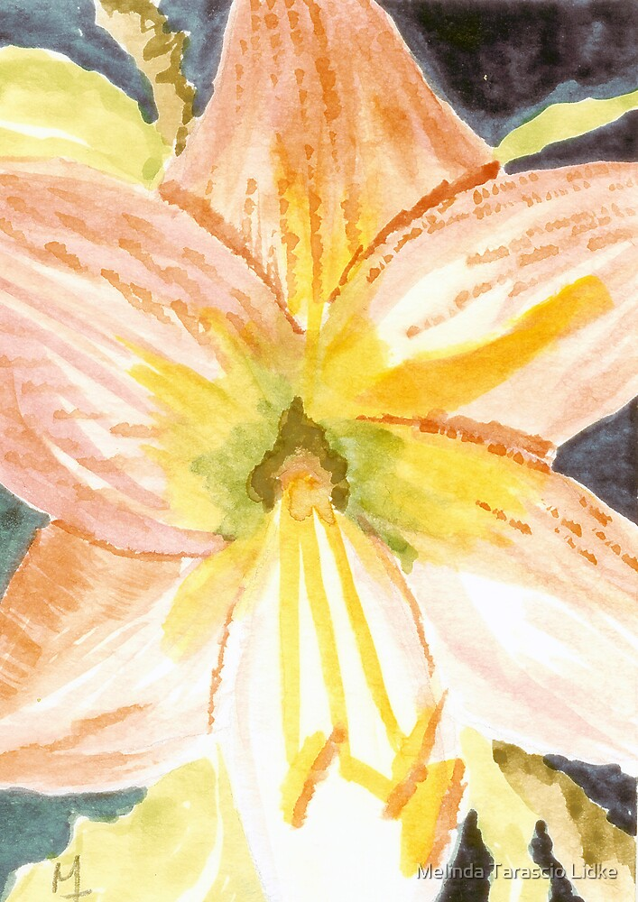 Pink Orchid at Midnight Watercolor 468 by Melinda Tarascio Lidke