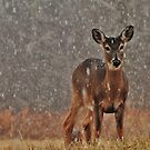 doe in the snow by dc witmer