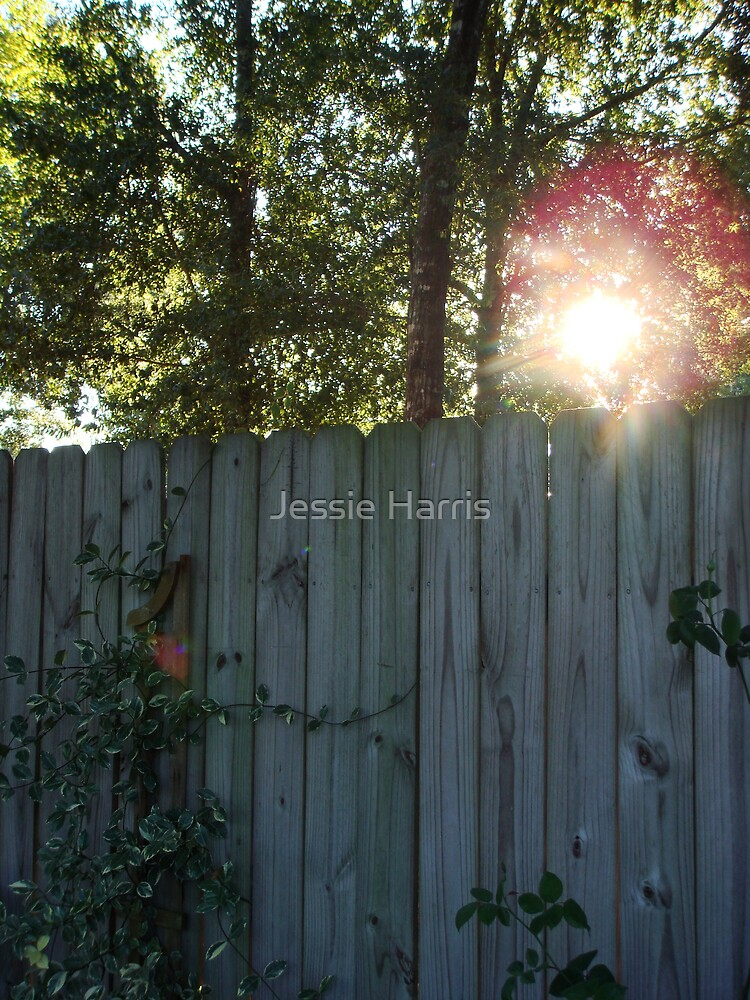 Secret Garden by Jessie Harris