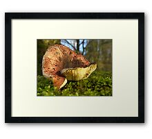 Ants point of view - Fungi on moss Framed Print