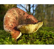 Ants point of view - Fungi on moss Photographic Print
