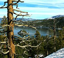 Overlooking Emerald Bay by Barbara  Brown