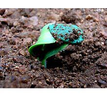 birth of a baby veg. Photographic Print