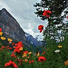 Peaks and Poppies by Linda Bianic