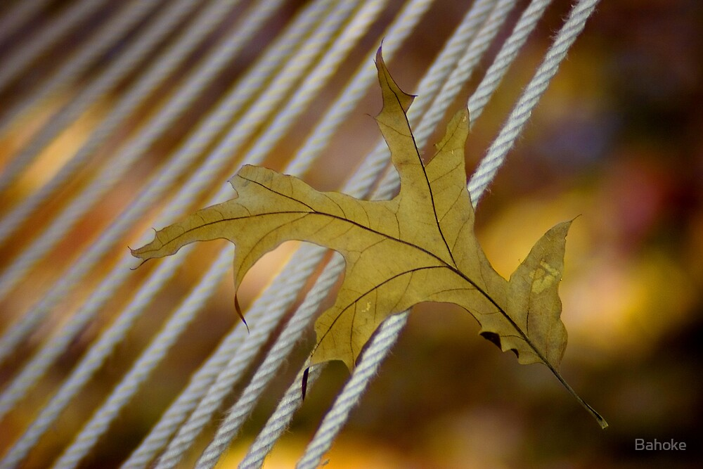 Leaf on a Rope by Bahoke