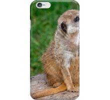 Meerkat at Rest iPhone Case/Skin