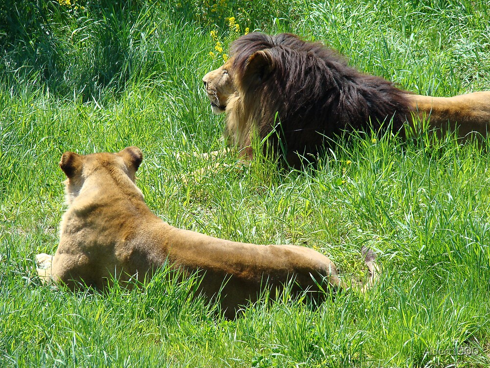 Male and female lions by Albert1000