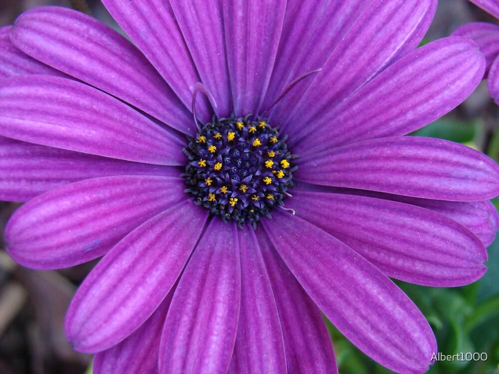 Purple days. by Albert1000