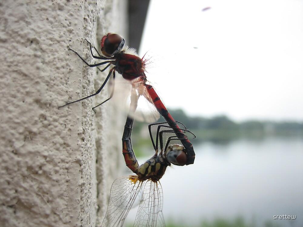More Dragon Flies?  =P by srettew