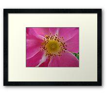 Macro flower detail Framed Print